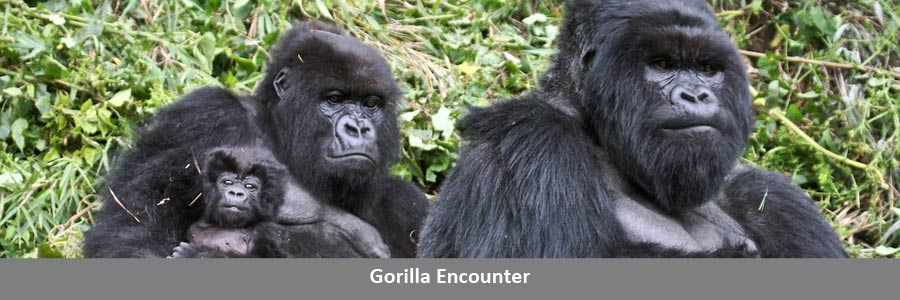 Gorilla Encounter Travel